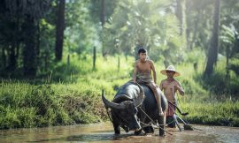 Best Cambodian Tours